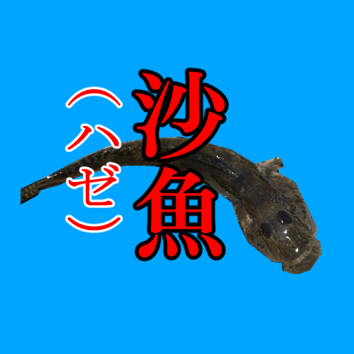 釣り魚種事典「ハゼ(沙魚)」